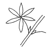 Palmately compound leaf