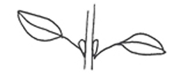 Leaf simple